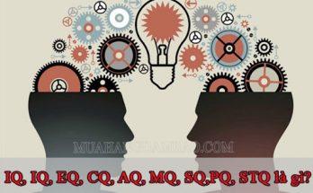 Các chỉ số IQ, EQ, CQ, AQ, MQ, SQ,PQ, STQ nghĩa là gì?
