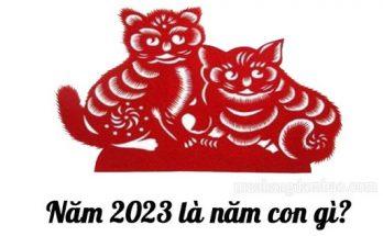 Năm 2023 là năm con mèo