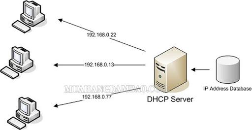 Cấu hình DHCP server