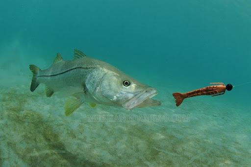 Bait là mồi câu cá chuyên nghiệpác của bait