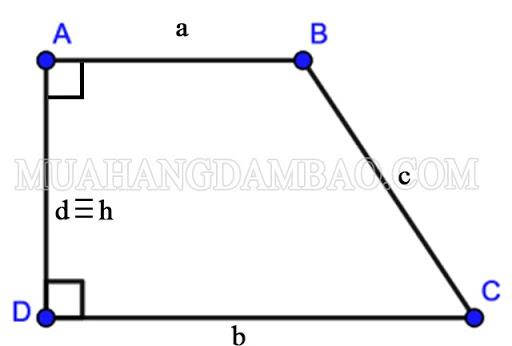 hình thang vuông là gì