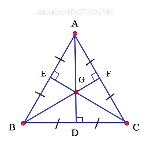 Đường trung tuyến trong tam giác đều
