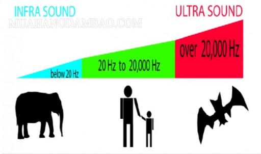 Phạm vi tần số âm thanh của con người và các loài động vật khác.