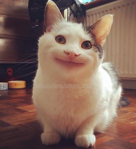 Gương mặt không cảm xúc của chú mèo Ollie