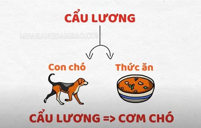 Ý nghĩa của thức ăn cho chó, cơm chó