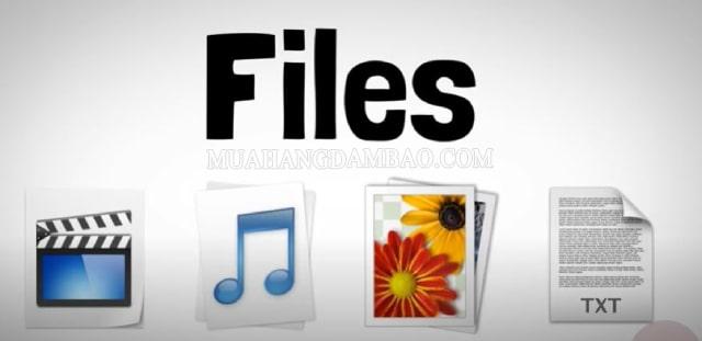 File là tệp tin lưu trữ dữ liệu của người dùng
