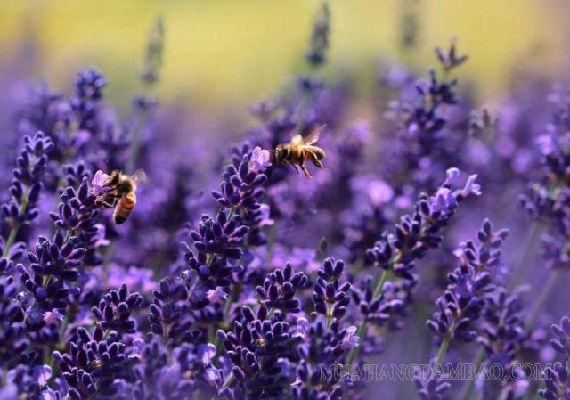 """""""Hữu xạ tự nhiên hương"""" có nghĩa là chỉ cần có mùi thơm thì sẽ tự tỏa hương"""