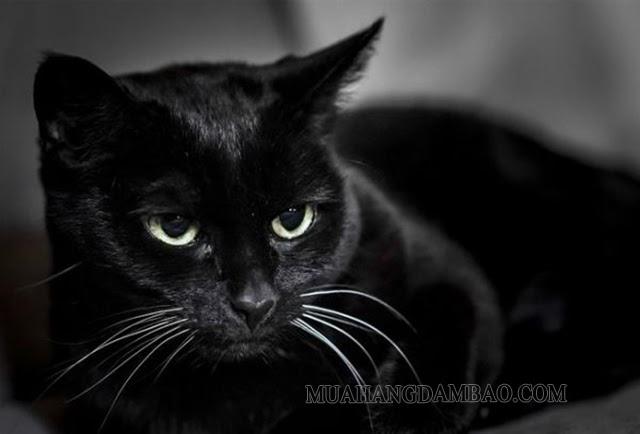 Màu đen tượng trưng cho điều xui xẻo, không may mắn
