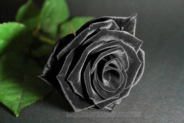Màu đen trong tình yêu thể hiện sự dũng cảm, mạnh mẽ