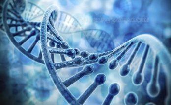 Gen là một đoạn ADN có chứa thông tin mã hóa
