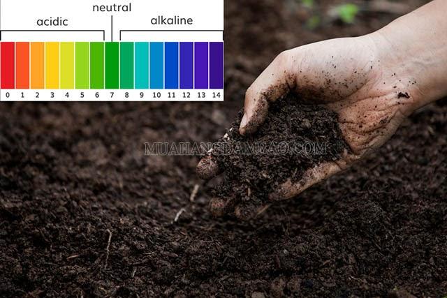 Kiểm tra độ pH của đất