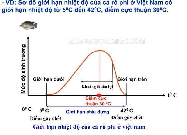 Sơ đồ miêu tả giới hạn sinh thái của loài cá rô